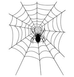 spidr web 03 vector image