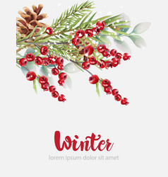 Winter cranberries with green fir tree leaves and vector
