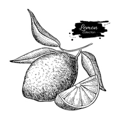 hand drawn lemon or lime fruit with leaves vector image vector image
