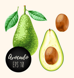 set of avocados vector image