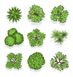 Top view different plants and trees set for vector