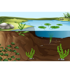 A pond ecosystem vector