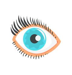 hunman blue eye with eyelashes cartoon vector image