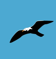 Soaring seagull in blue sky seabird isolated on vector