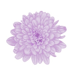 Beautiful purple dahlia with the effect watercolor vector