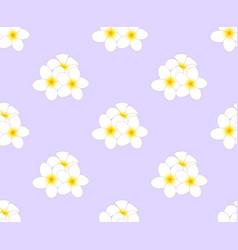 plumeria frangipani seamless on purple background vector image