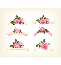 set a beautiful colored roses vector image