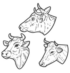 set of cow heads on white background design vector image