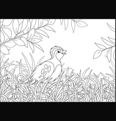 Small quail walking in thick grass vector