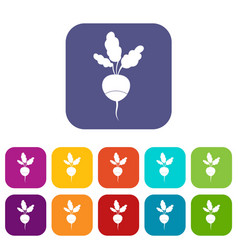 fresh radish icons set vector image vector image
