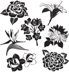Black and White Set of Flowers vector
