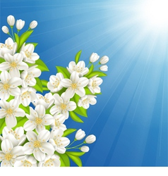 Blossoming cherry vector image