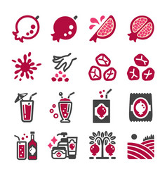 pomegranate icon set vector image
