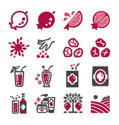 pomegranate icon set vector image