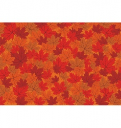 Red maple autumn leaves background vector