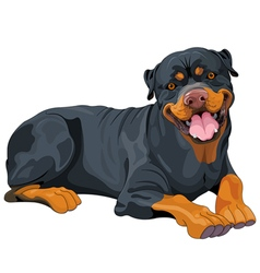Rottweiler vector image