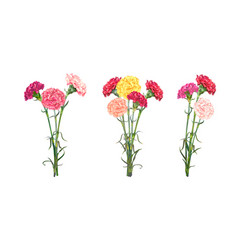 Set of three carnation bouguets vector
