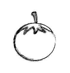 contour vegetable tomato icon vector image