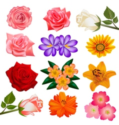set of flower on a white background vector image vector image