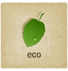 leaf eco old background vector image vector image