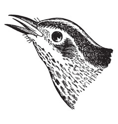 Black and white creeping warbler vintage vector