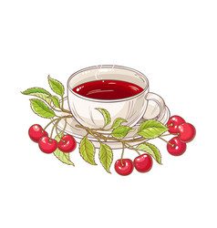 Cherry tea vector