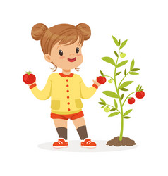 Sweet little girl picking tomatoes in the garden vector