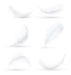 White feathers realistic set vector