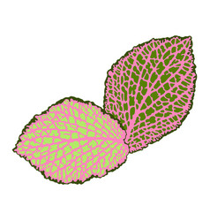 Decorative leaves isolated natural detailed vector