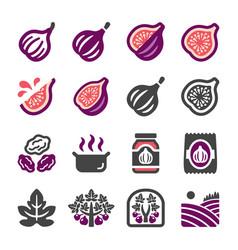 fig icon set vector image