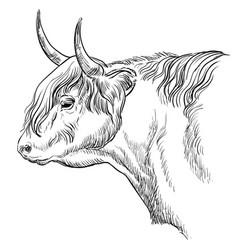 Head bull in profile vector