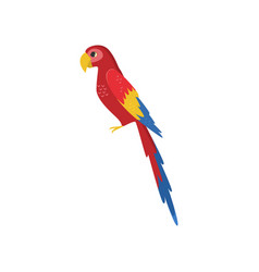 Large red macaw parrot side view isolated on white vector