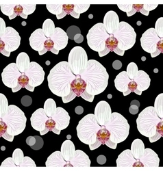 Seamless pattern with orchid flowers vector image