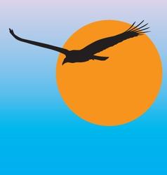 Turkey vulture vector