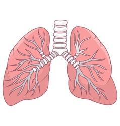 Human lung cartoon vector image