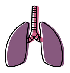 lungs human organ vector image