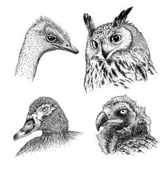 realistic heads of wild birds vector image