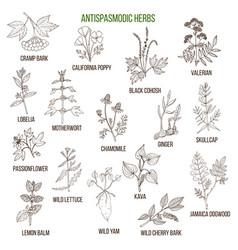 Antispasmodic herbs hand drawn set medicinal vector