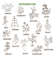 antispasmodic herbs hand drawn set of medicinal vector image