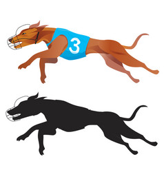 Greyhound dog racing vector