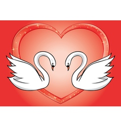 white swans and red heart - card vector image vector image