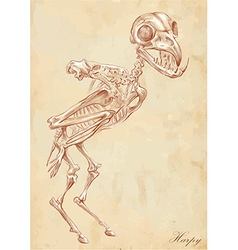 An hand drawn Harpy vector