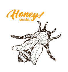 Honey sketch bee honey hand drawn superfood vector