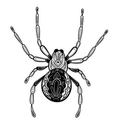 spider with patterns entangle black vector image