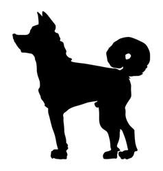 japanese dog akita vector image vector image