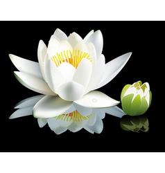 waterlily flower vector image vector image