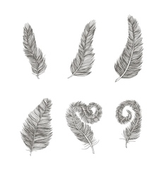 Feather set line drawing element vector image