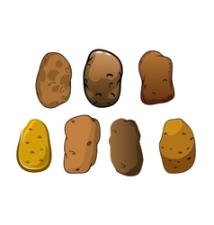 Fresh potatoes vegetables with brown skin vector image