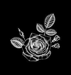 Trendy floral design white roses on black vector