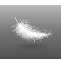 Feather falling light small vector